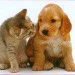 Interventi a favore degli animali durante le catastrofi – IFAW Disaster Response Grant